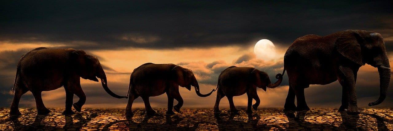 Elefantes cambiando dirección